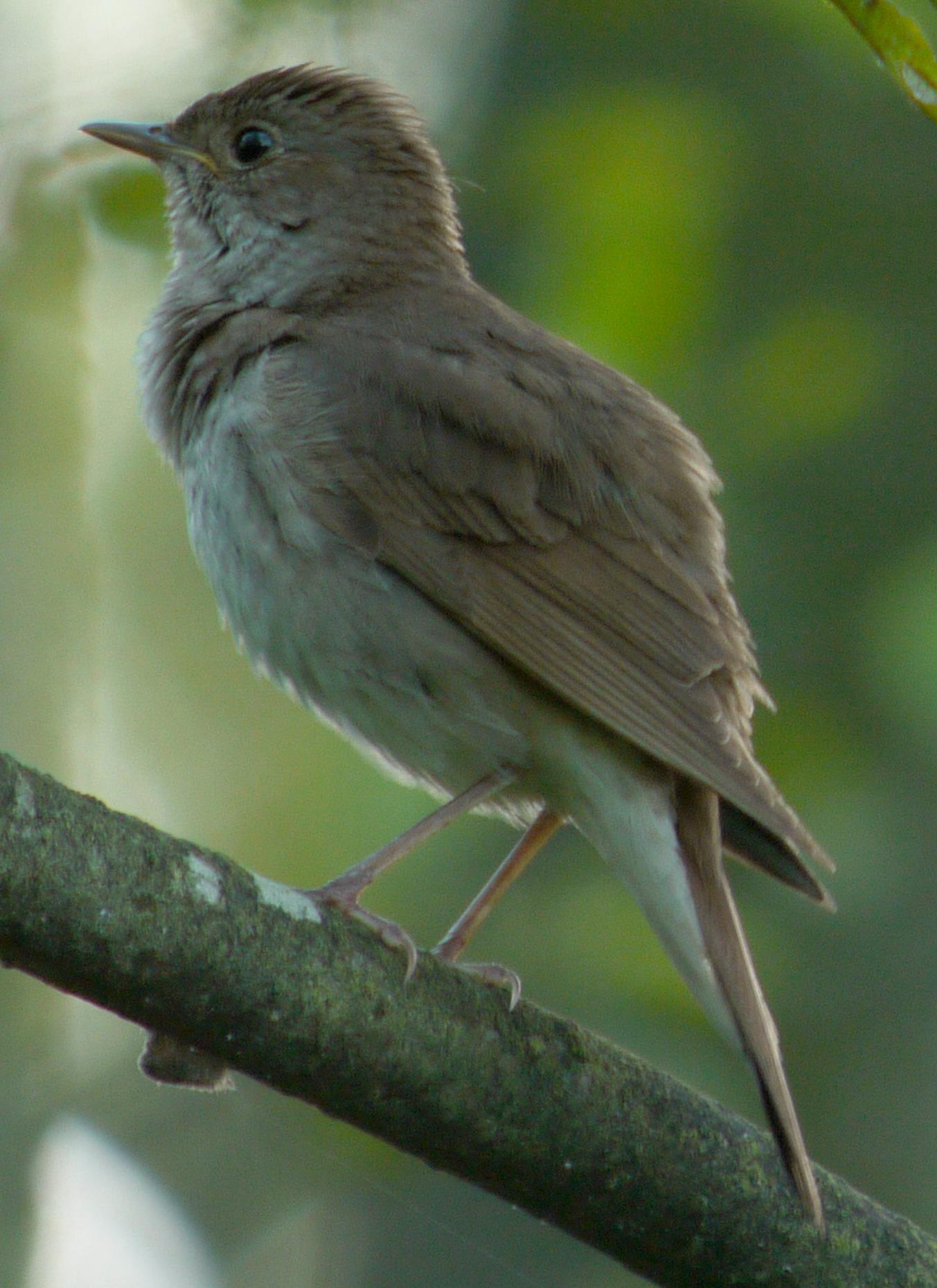 pierderea în greutate a omului de păsări ghid de slabire youngevity