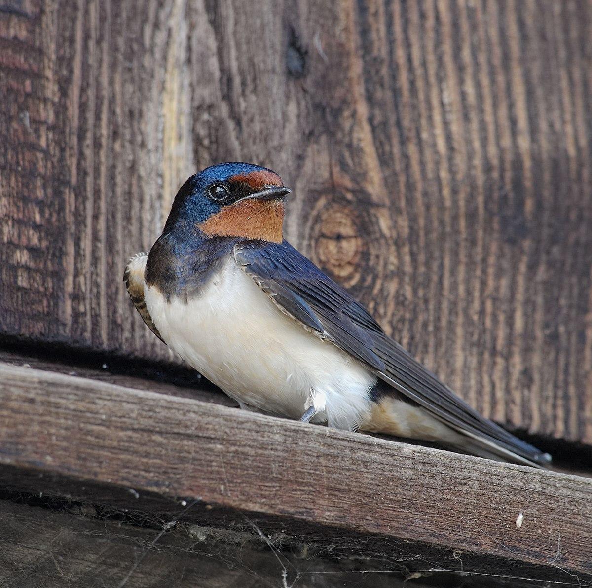 pierderea în greutate a cuibului de păsări pierdeți în greutate pentru numerar