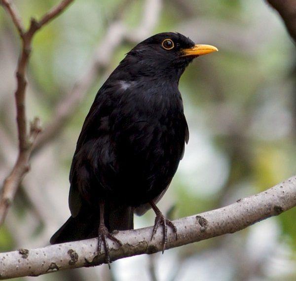 pierderea în greutate a omului de păsări cavillul henry pierde în greutate
