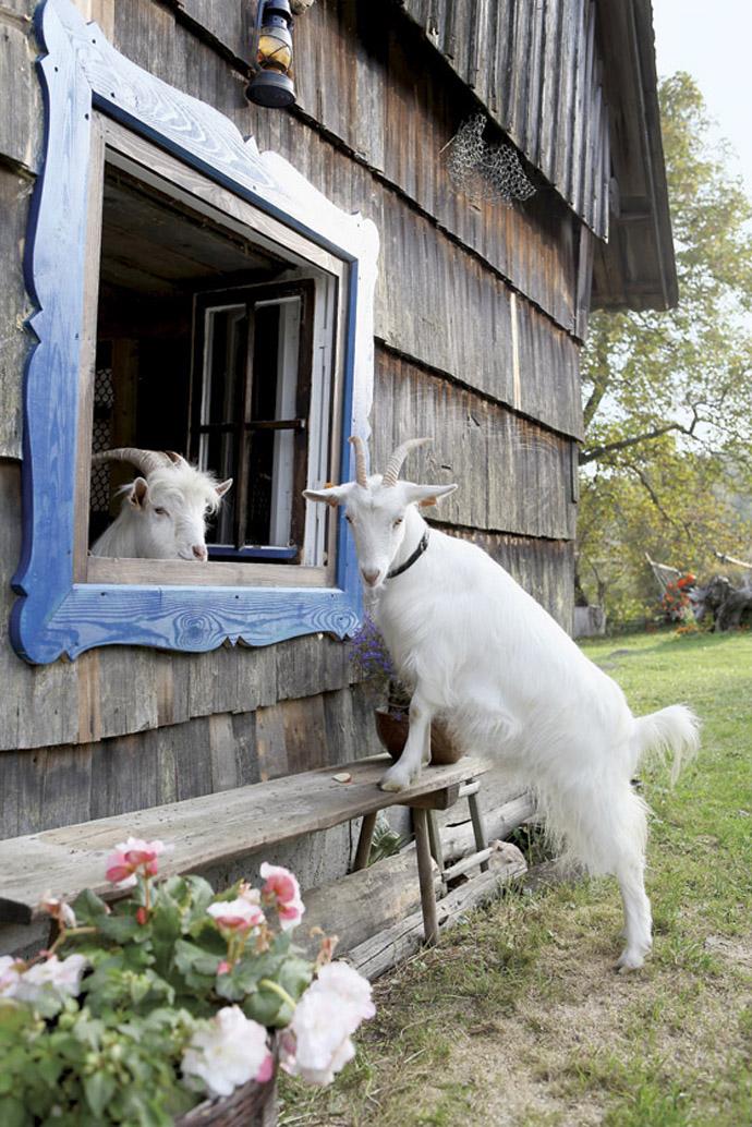 Intretinerea oilor in perioada de toamna si in stabualtie | Revista Ferma