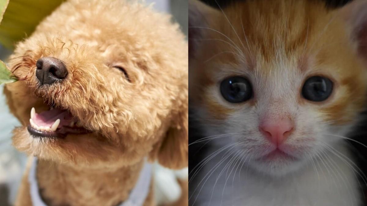 cum să slăbești la animalele de companie pakka