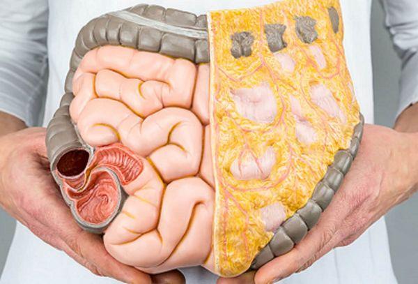 Cum scapam de grasimea din jurul organelor interne?
