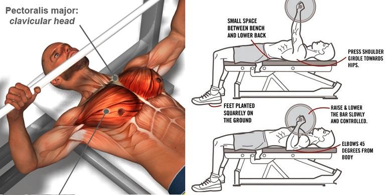 erecție de pierdere de grăsime pierderea in greutate palpitatii scurtarea respiratiei