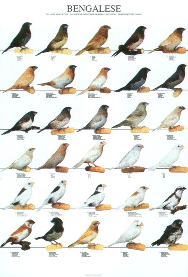 pierderea în greutate a cuibului de păsări rezultate de slăbire