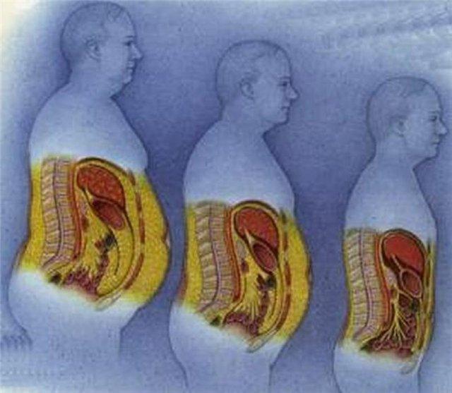 organismul pierde vreodată celulele de grăsime Pierderea în greutate menstruația prelungită
