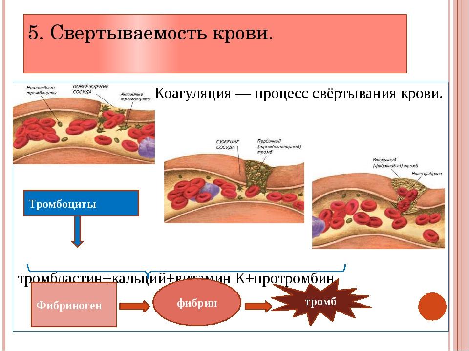 cum pierde organismul celulele grase