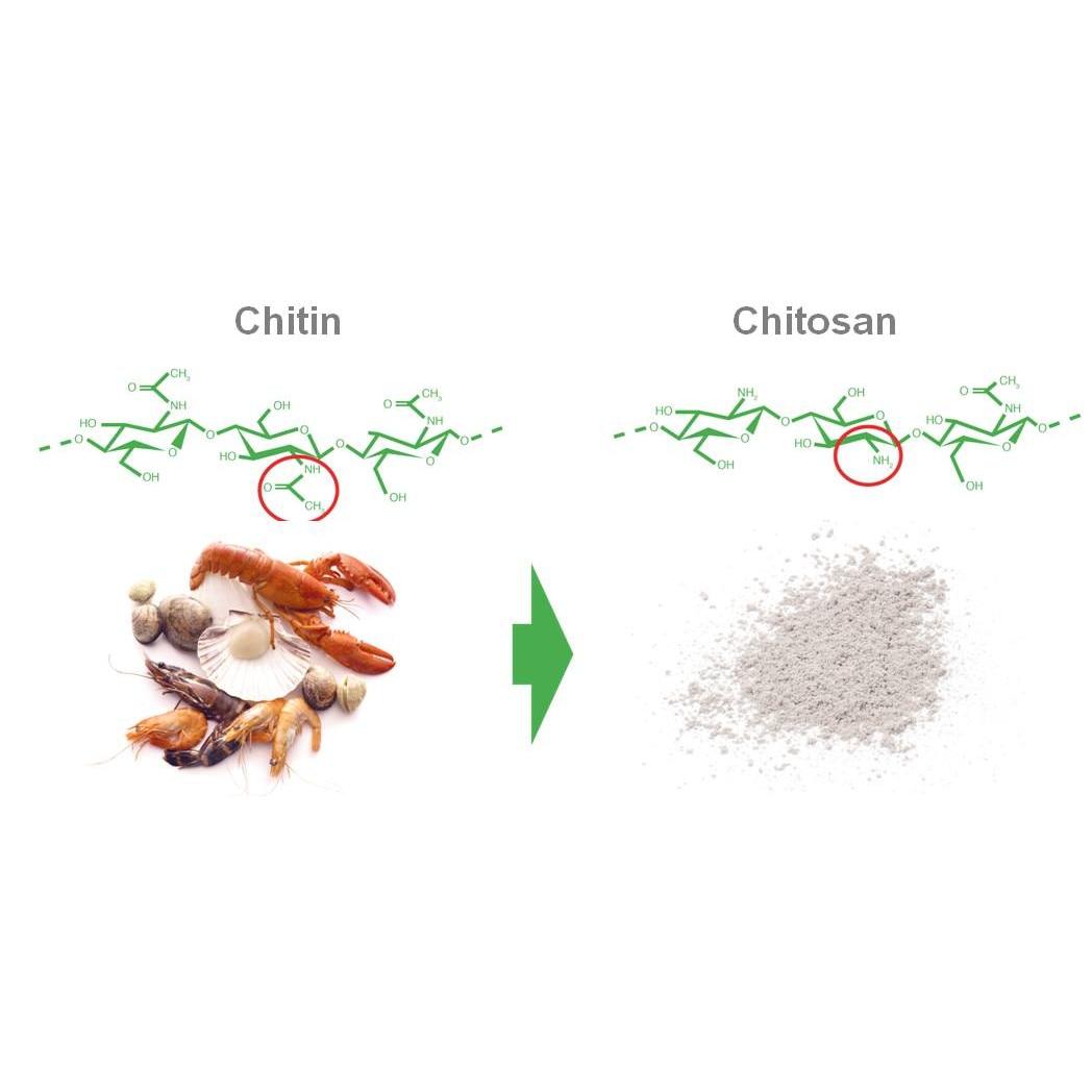 chitosan arzător de grăsimi