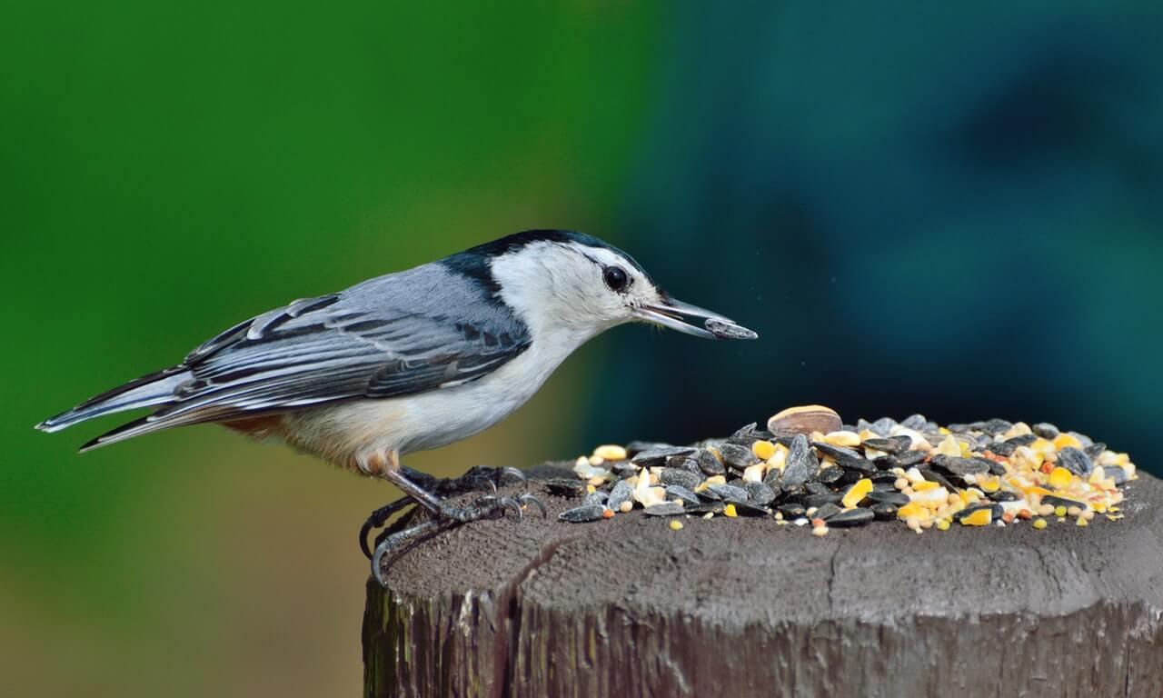 pierderea în greutate a cuibului de păsări scădere în greutate nyu