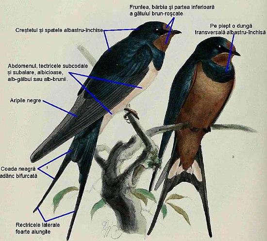 pierderea în greutate a cuibului de păsări mananca grasimi bune pentru a slabi